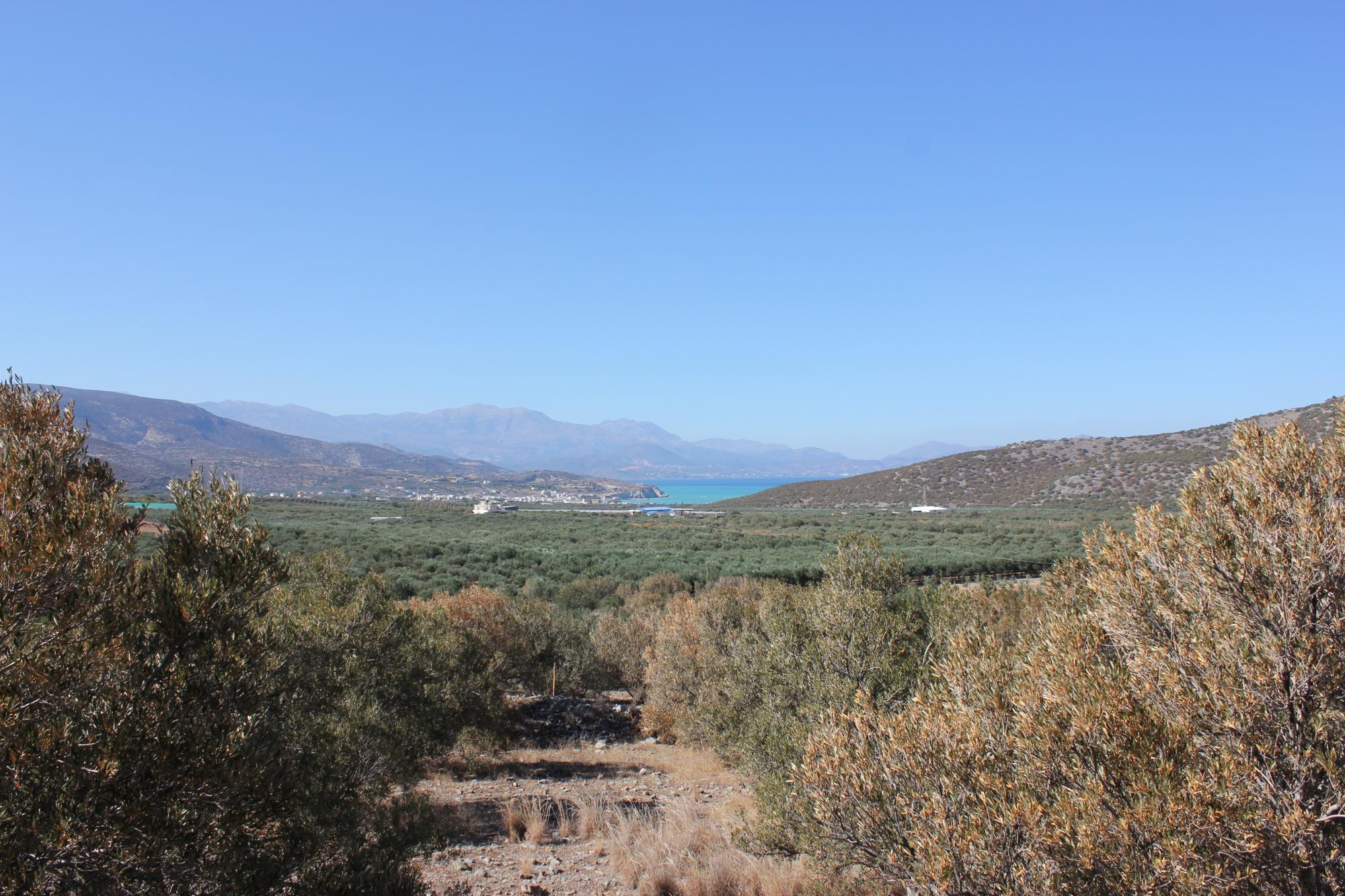 Sea view building plot with olive grove